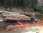 Using ropes to control large logs...