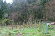The newly planted section of our forest garden